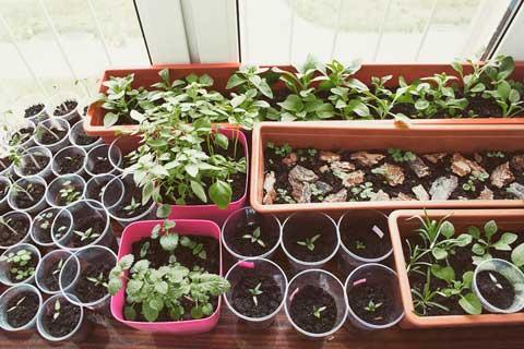 Gartenarbeiten im März