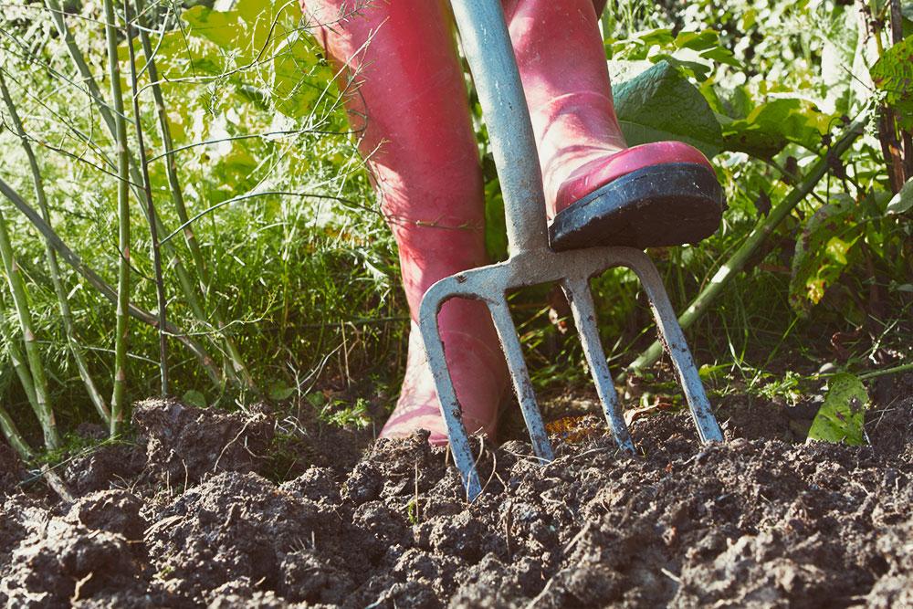 Etwas Neues genug Gartenarbeiten im Februar - Mein Kuechengarten &ZX_85