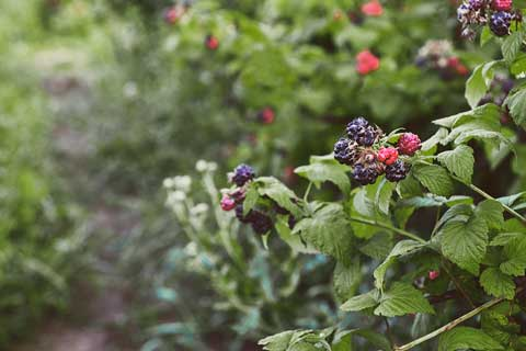 Gartenarbeit Juli