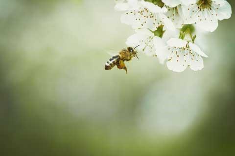 Bienen und Insekten